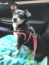 Lulu in car.jpg