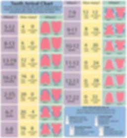 Child-Tooth-Development-Chart.jpg