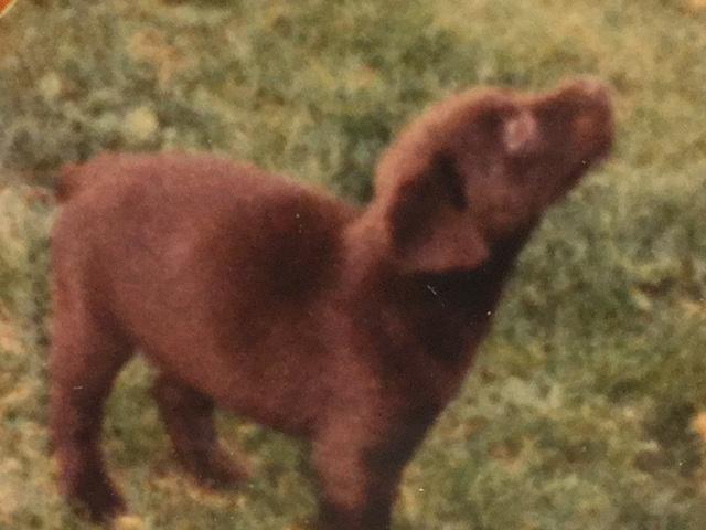 Webee at 6 weeks