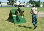 TrainingSchutzhundRetrieveOverWall.jpg