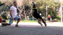 האם הכלב שלי בריא לביצוע פעילות גופנית ?