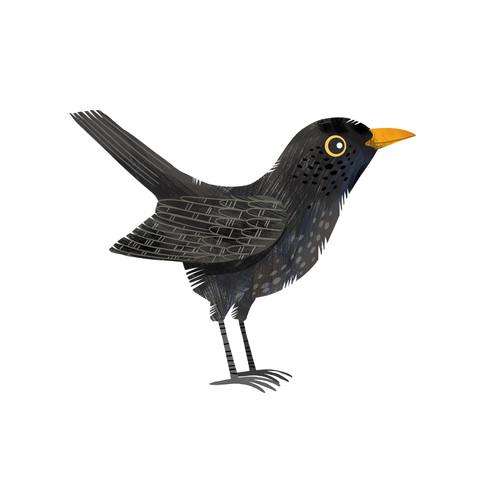 Black bird 1.jpg