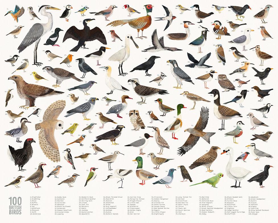British Birds Poster With text 2 web.jpg