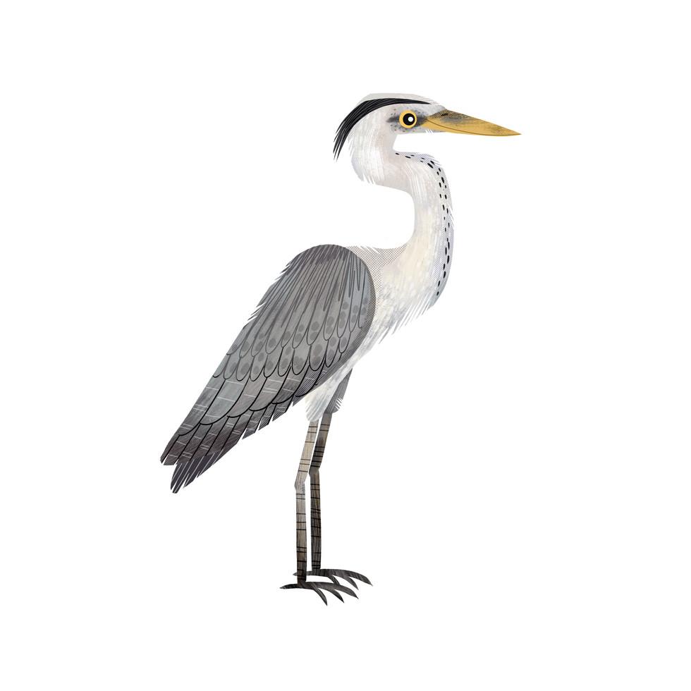 Heron 1.jpg