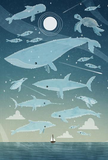 Ocean Constellations