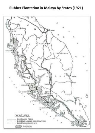 想知道马来亚橡胶种植分布如何吗?