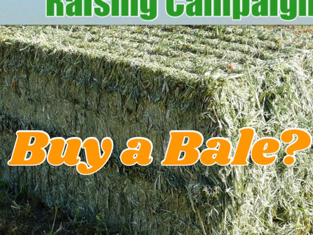Buy a Bale for GERF?