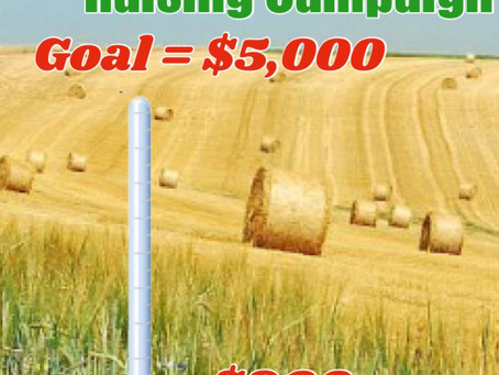 Update!! Sizzling Summer Hay Raising Campaign!