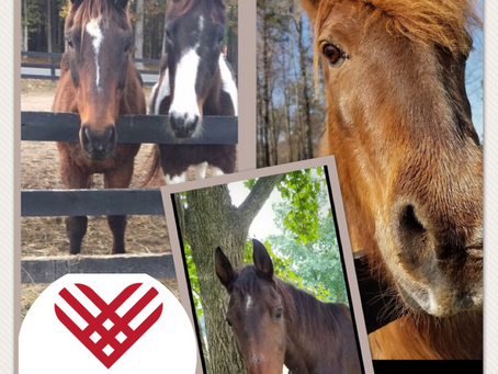 #GivingTuesday-support a great cause at Greenfield Equine Retirement Farm