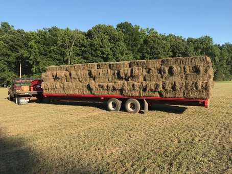 Help us Feed with Hay!