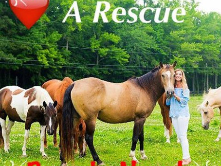 Beautiful Kate with Rescues
