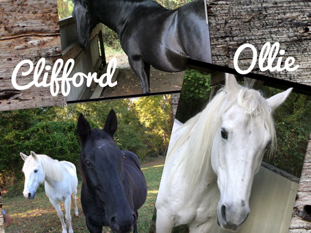 Say YES to Clifford and Ollie! 😊🐴