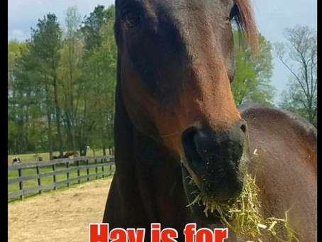 Why do we need so much Hay?