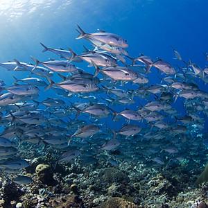 The Best of Solomon Islands