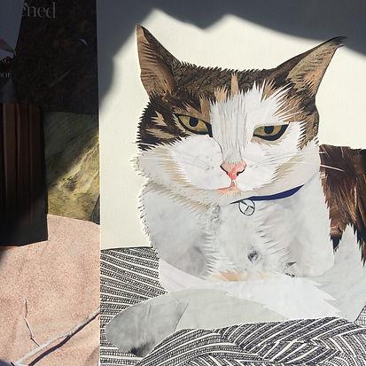 Zak the Cat - Pet Portrait
