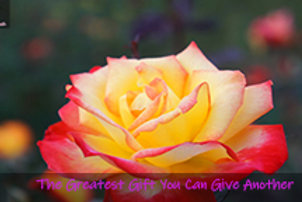 Donor Card-Yellow Rose