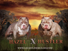 Hustler x Hazel