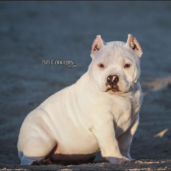 Louis V x Ciroc - Snow White - 7 months