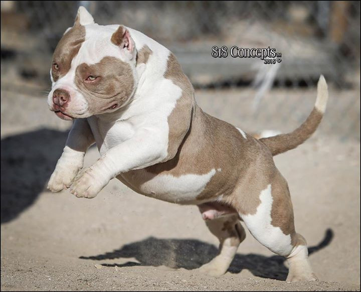 Ruthless (Louis V x Tequila) - 8 months