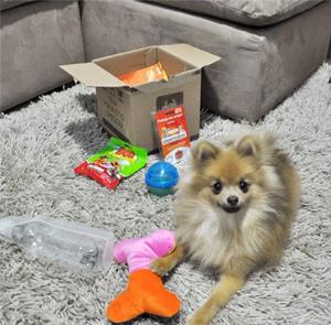 Maskoto - Produtos de pet shop