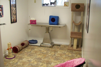 cat activity room