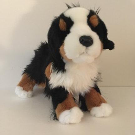Douglas Trevor Bernese Mountain Dog