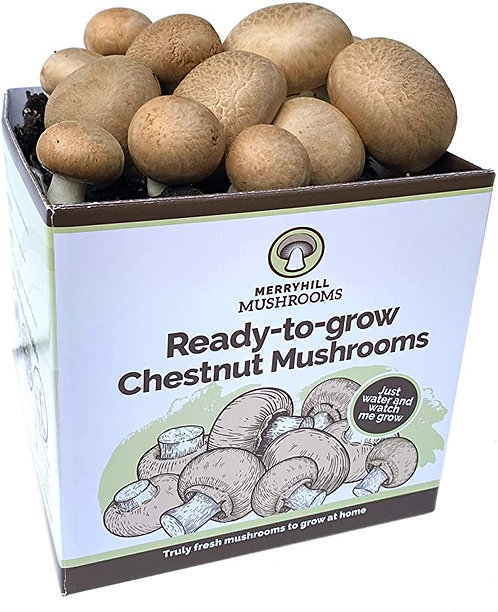 Beginner's 'Ready-to-grow' Mushroom Kit