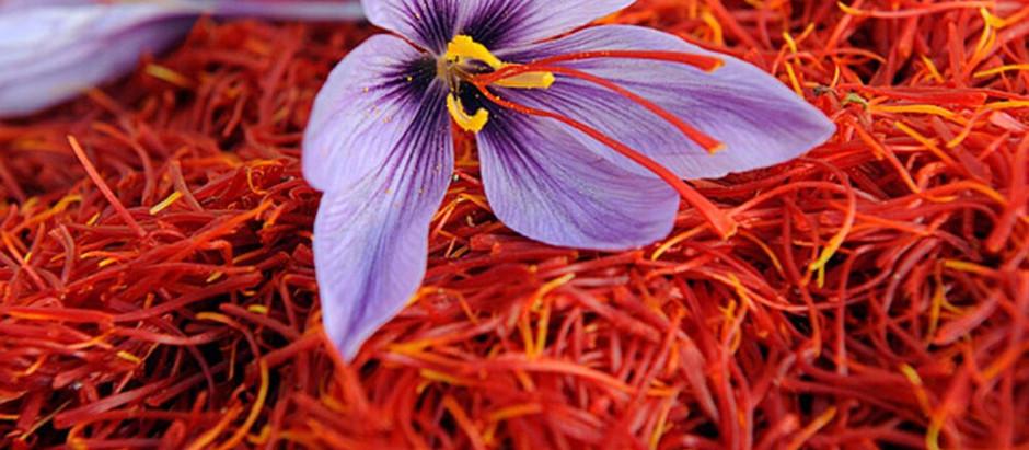 Saffron, a mystical spice