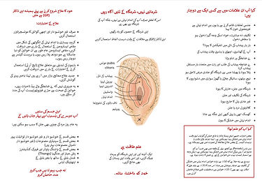 A1 Vaginal Dryness Leaflet inside pages.