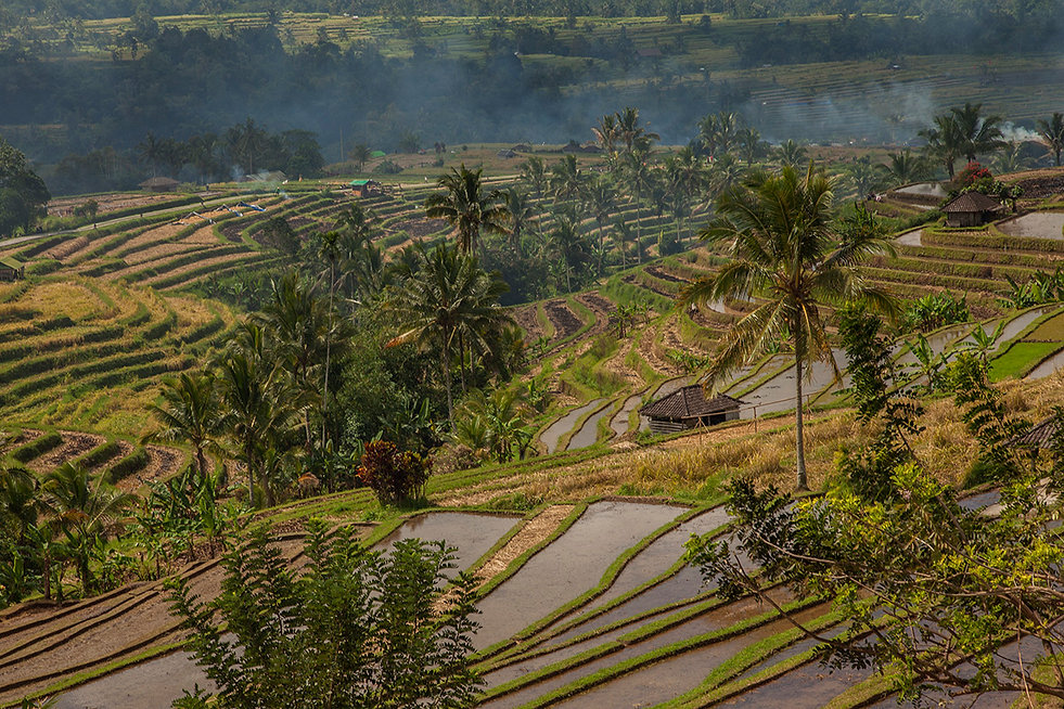 Rice fields Bali Monika Krochmal gallery