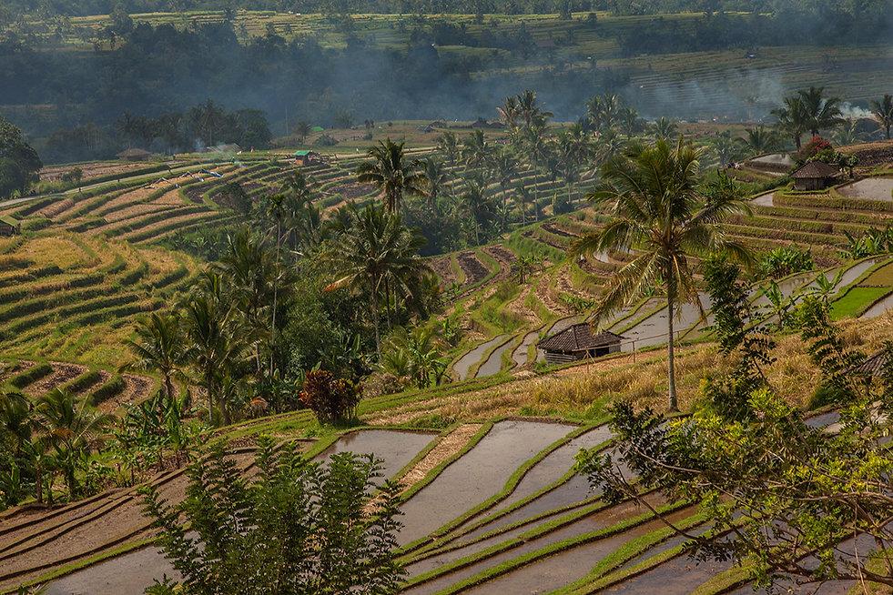 Rice fields Bali Monika Krochmal gallery
