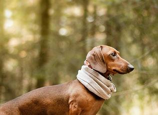 cute-brown-dachshund-dog-during-daytime.