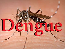 Dengue-em-Pedreira-1024x614.jpg