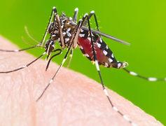 dengue-2-1549631253-1024x536.jpg