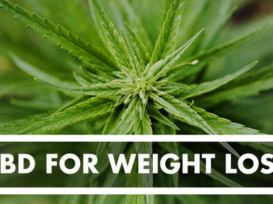 Weight Loss + CBD