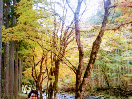 秋はやっぱり良いね〜