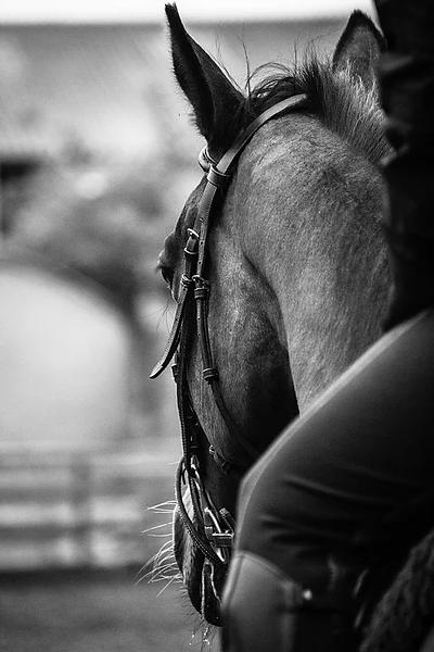 dos cavalier cheval attentif.webp