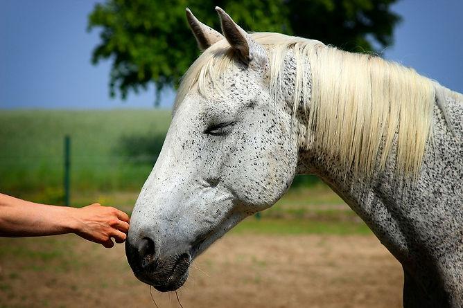 homme main cheval.jpg