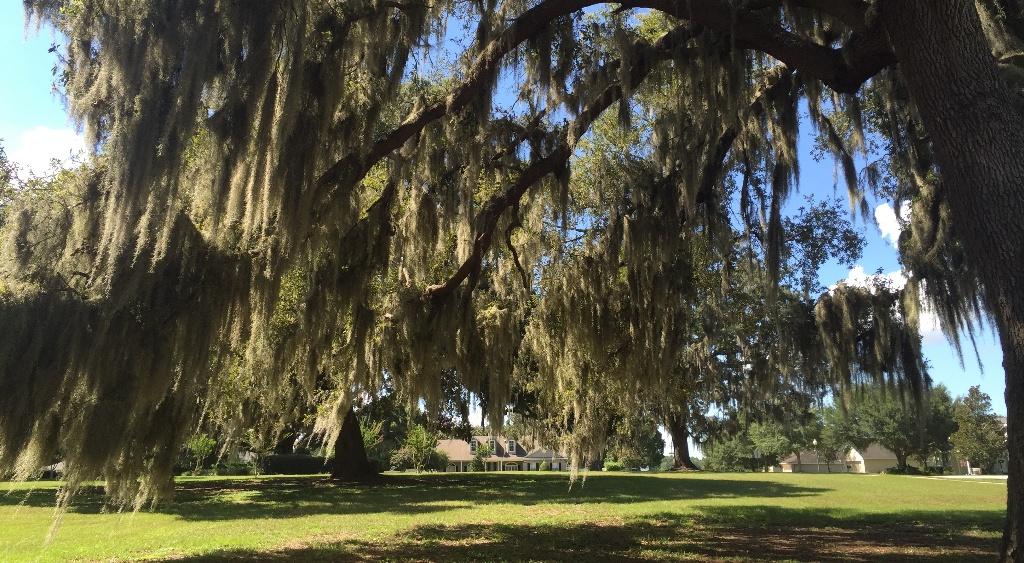 Oaks in the Park.jpg