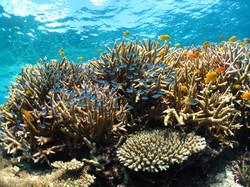 サンゴ (2)