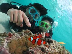 サンゴ (5)