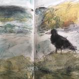 Crow Perranporth