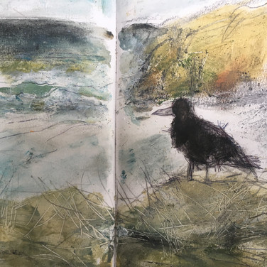 Crow Perranporth
