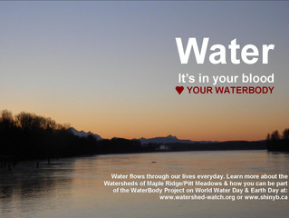 WaterBody: Where conservation and art flow in harmony