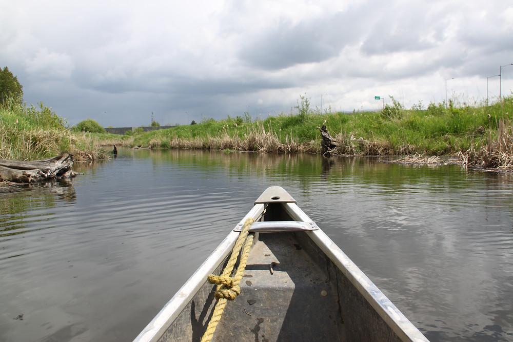 Blind slough fish trap (9)-1.jpg