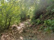 Sentiero per Alpe di Buffalora