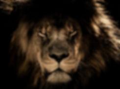 african-lion-2888519.jpg
