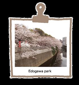 江戸川公園E.png