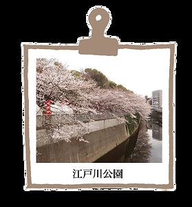江戸川公園.png