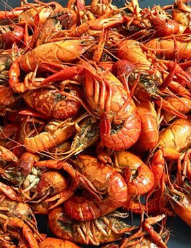 crawfish-3901231__340.jpg